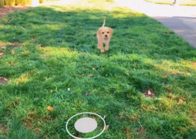 Adobe AR Puppy App